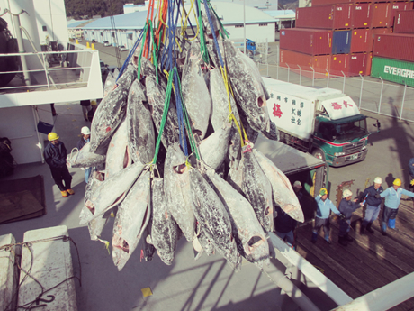 冷凍魚類荷役作業